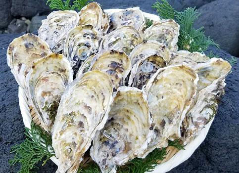 森のアスパラ 牡蠣殻 肥料